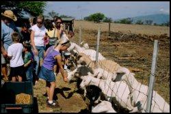 Goat Dairy, maui hawaii, vacation destination