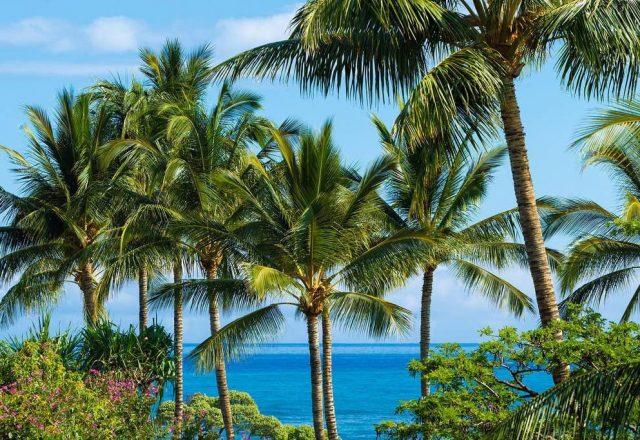 Hualalai Resort Hillside 4102 - Palm trees - Hawaii Vacation Home