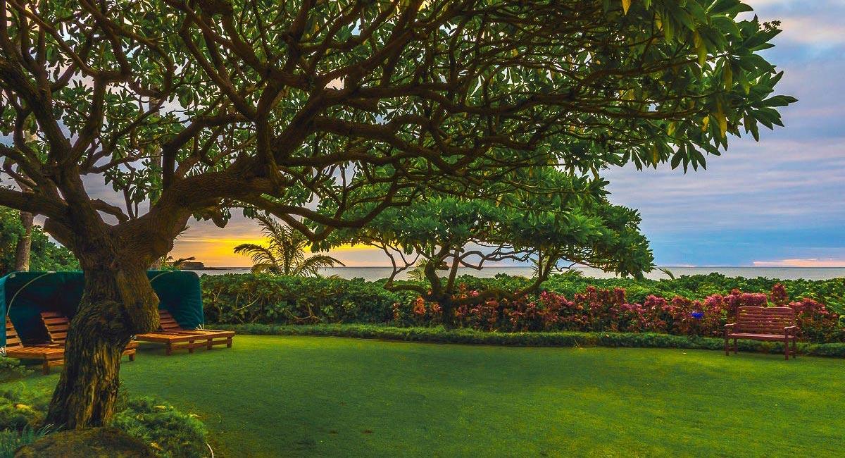 Ocean Spray - Beautiful Tree in the backyard - Oahu Vacation Home