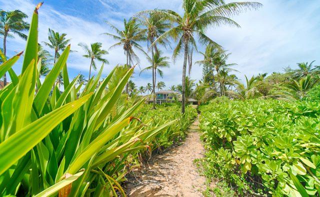 Beachscape - Private walkway to the house and beach - Kauai Vacation Home
