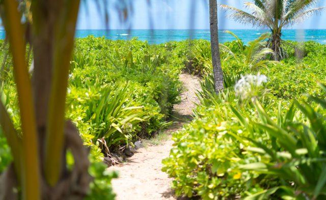 Beachscape - Walk to the beach in your backyard - Kauai Vacation Home
