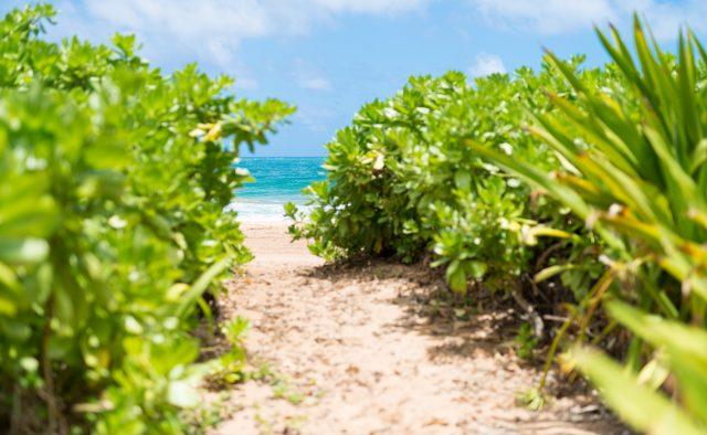 Beachscape - Private Path to the beach - Kauai Vacation Home